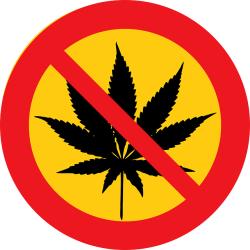 Zaujímavosti v práve: Prechovávanie marihuany